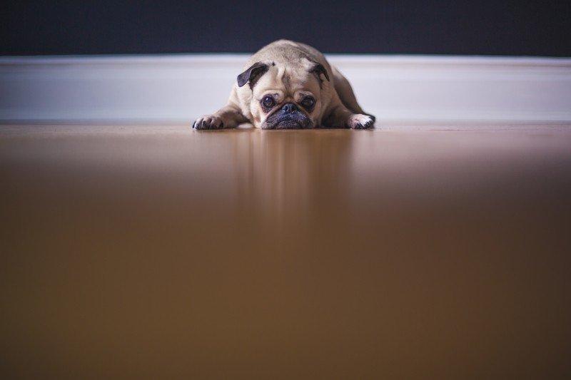 animator-dogs-floor